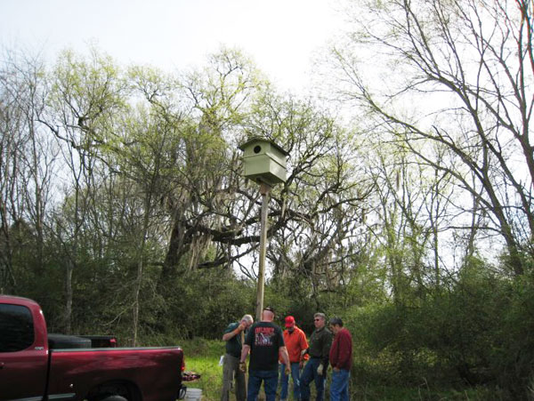 Members of the River Region Bird Club and Autauga Bluebird Trail installing a Barn Owl Nest Box at Jackson Island